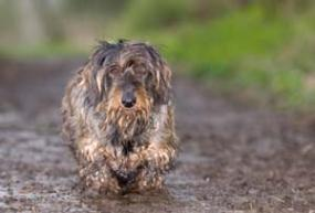 Faq S Are Narcissists Called Dirty Dogs Elisse Stuart S Weblog